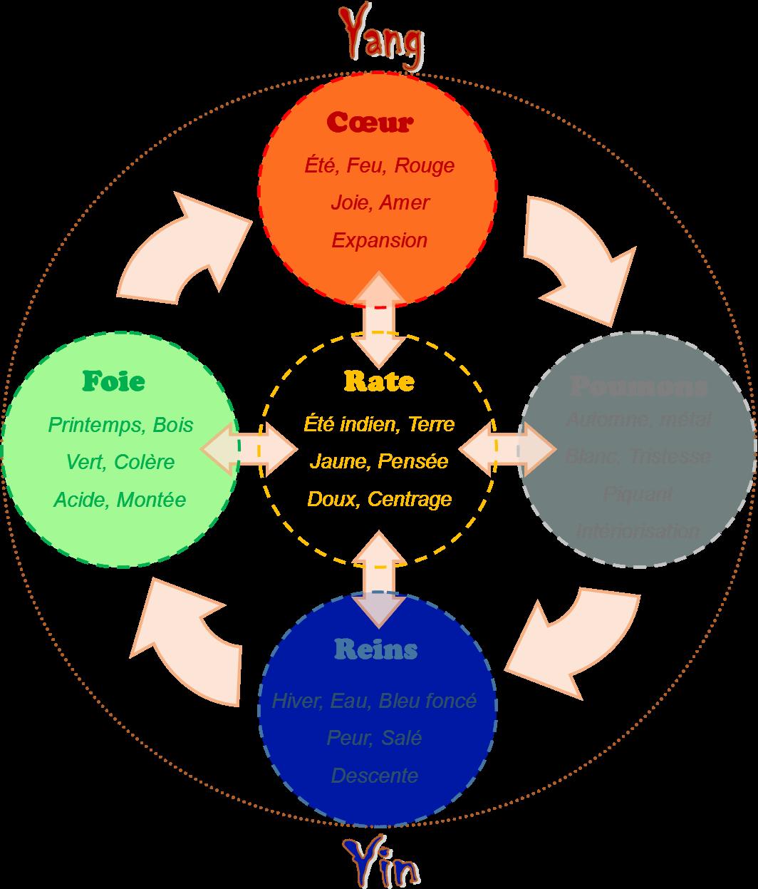 5 mouvements MTC 1 - Comment définir la Médecine Traditionnelle Chinoise (MTC)? - Arkade Genève - Thérapie, training, bien-être